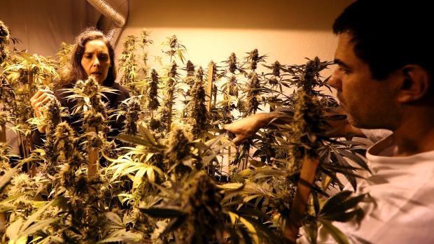 uruguay-marijuana.jpg