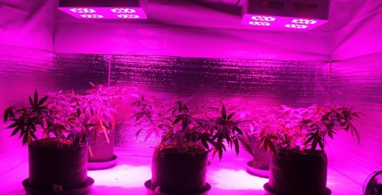 re led grow light review