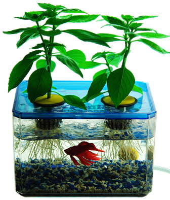 Mini aquaponics garden for Fish tank hydroponic garden