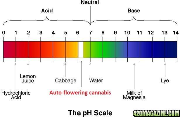 PH scale Coffee With Low Acid Acid Alkaline Food Chart