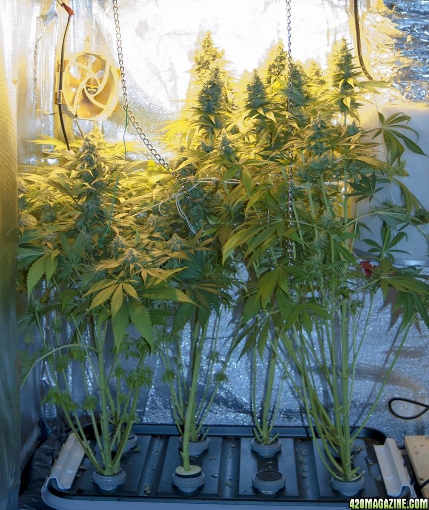 first time grow 400w hps diy veg flower closet lp aeroponics