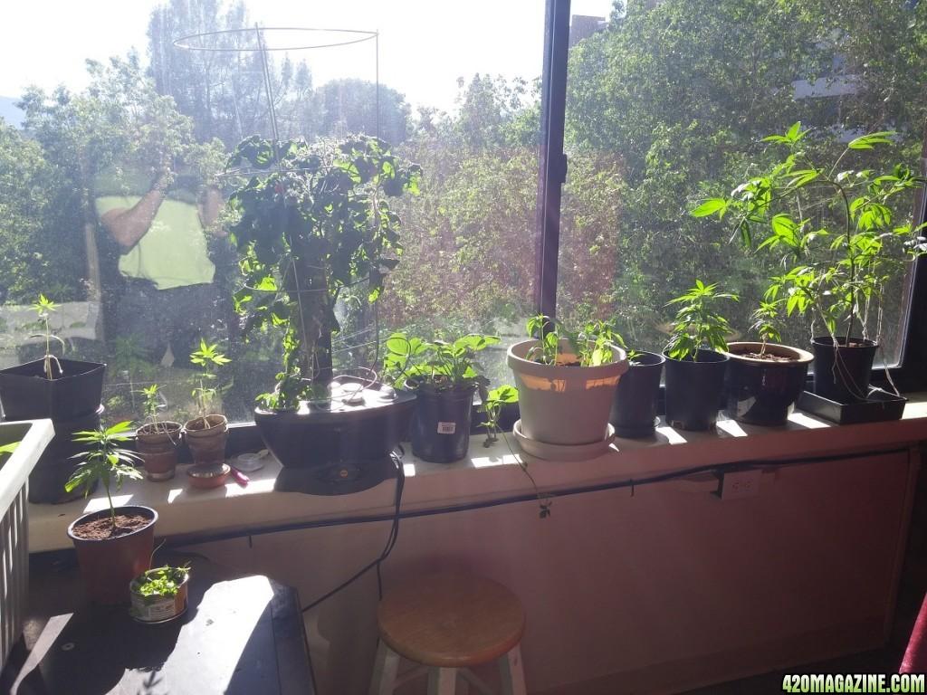 high rise low budget indoor sun lights grow u0026 reveg storm trooper