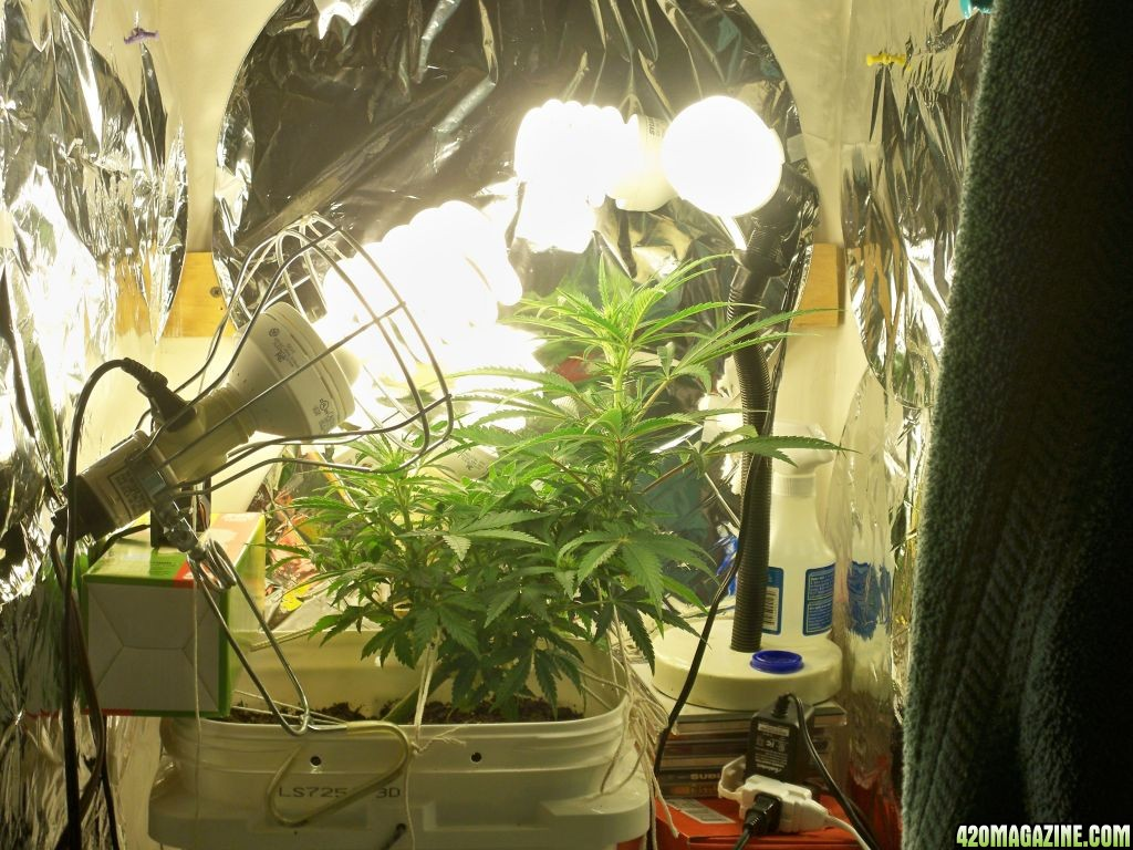 amusing instructions complete grow setup youtube room diagram for large marijuana interesting filter list design size ventilation agromax with home sale led cheap cannabis kit carbon hydroponic closet ideas tent climbing