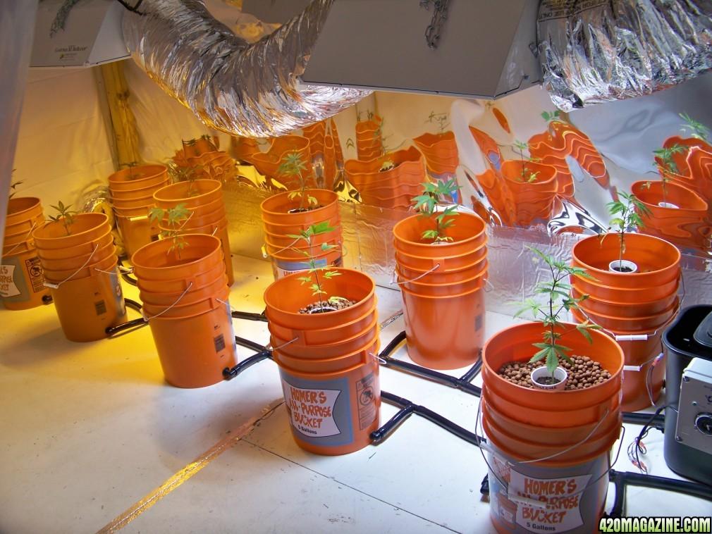 diy hydroponics top drip bucket system | Download Aquaponics
