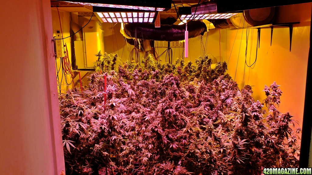 Mars Hydro Led Grow Light Discussion Page 3