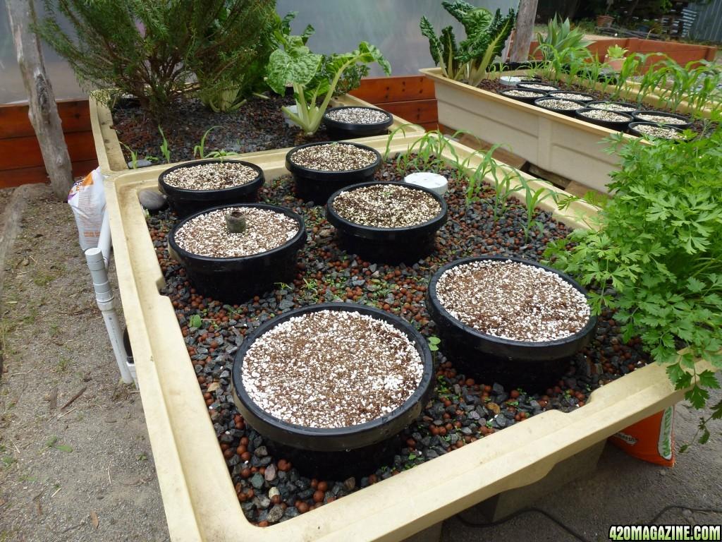 Aquaponics for Hydroponic grow bed