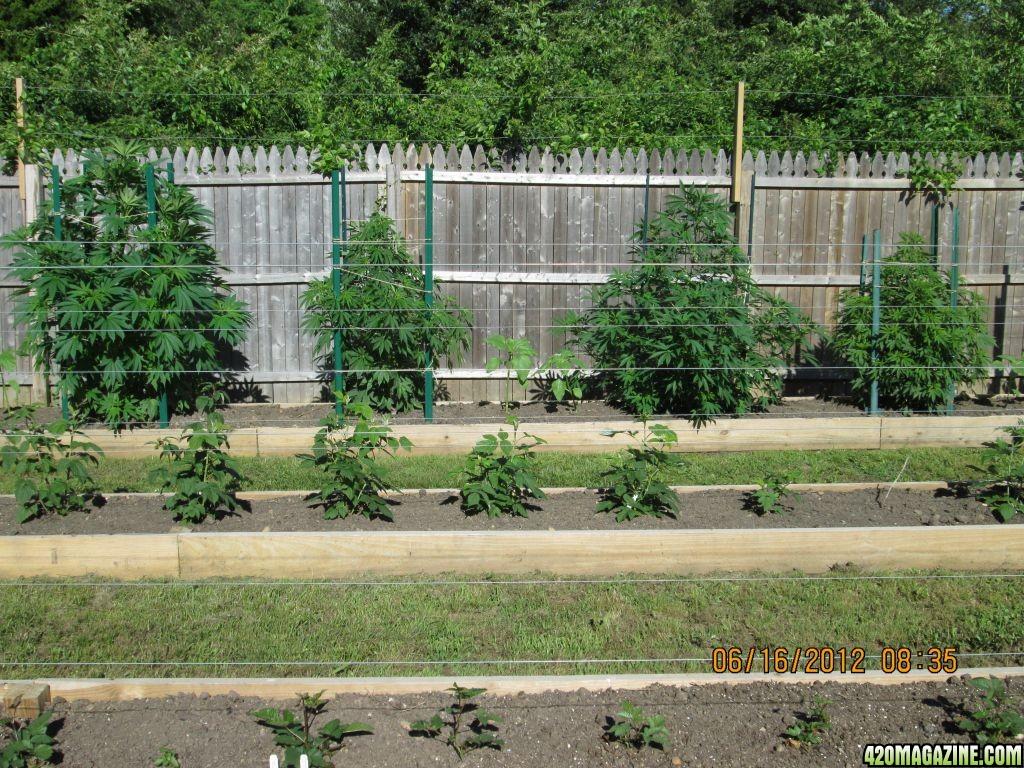 2012-06-15_Garden_001.JPG