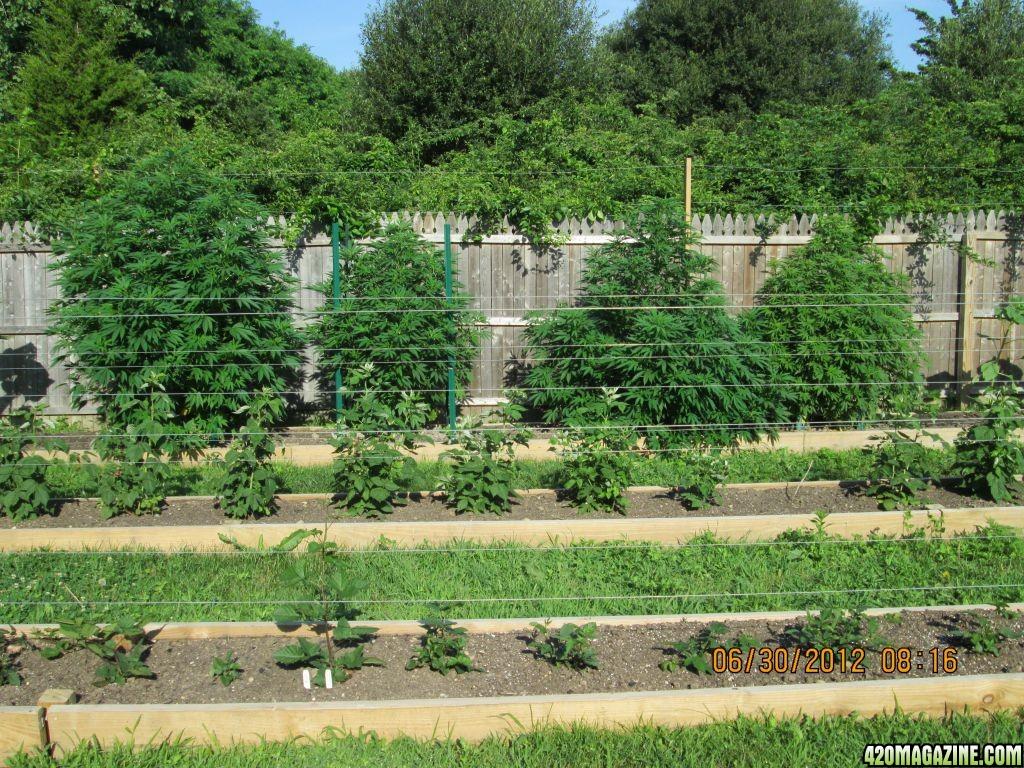 2012-06-30_Garden_001.JPG