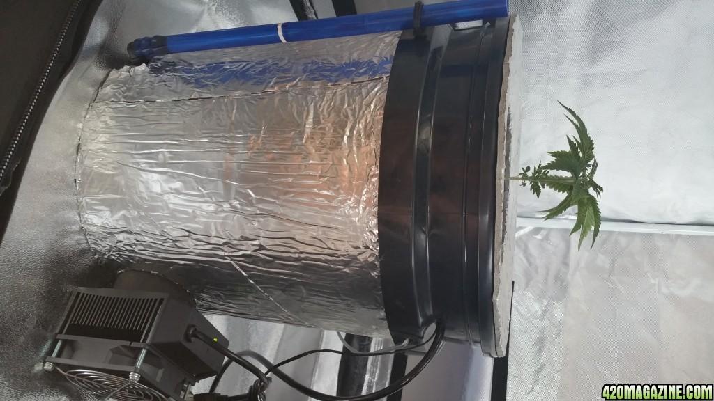 First Grow - Casey Jones - DWC - SCROG - Ice Probe Thermoelectric ...