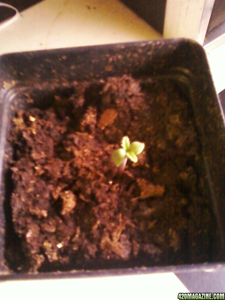 2_day_old_mystery_seedling.jpg