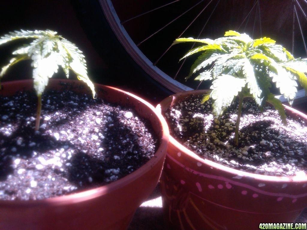 2_plants1.jpg