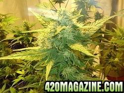 4210new_grow_5421-thumb.jpg