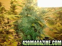 4210new_grow_561-thumb.jpg