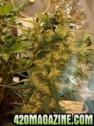 4210new_grow_588-thumb.jpg
