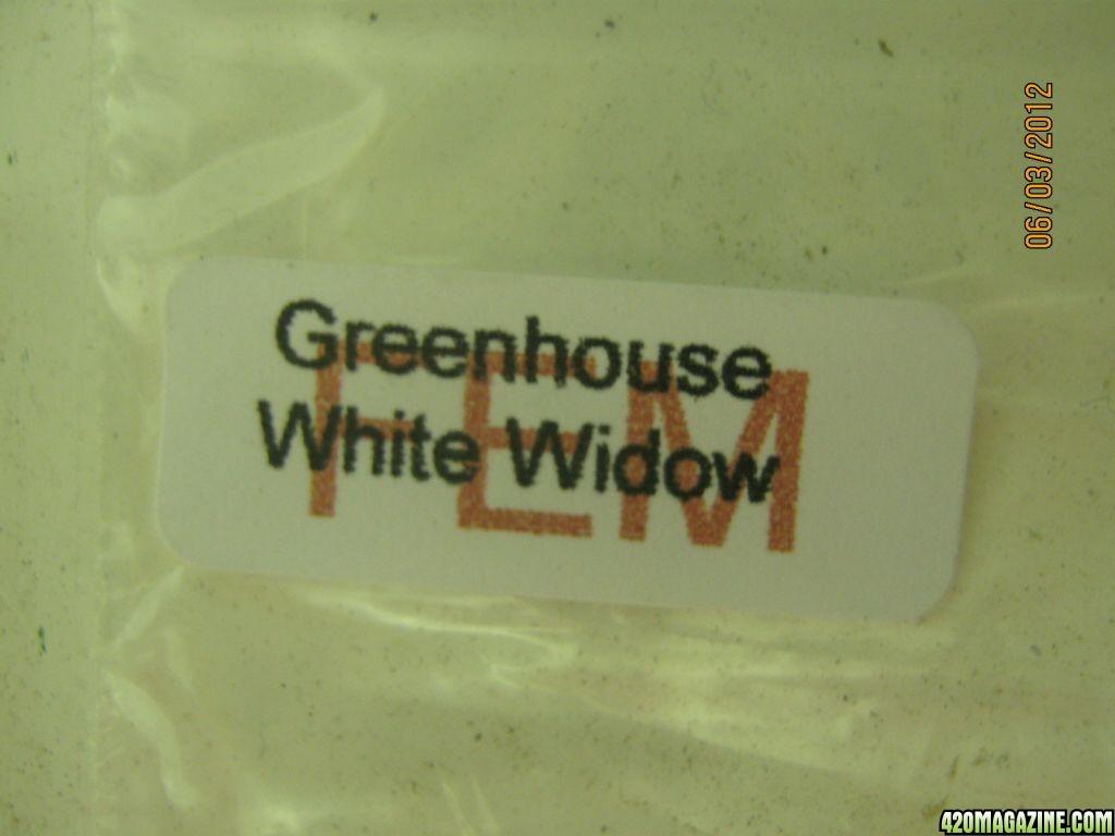5_White_Widow_2.JPG