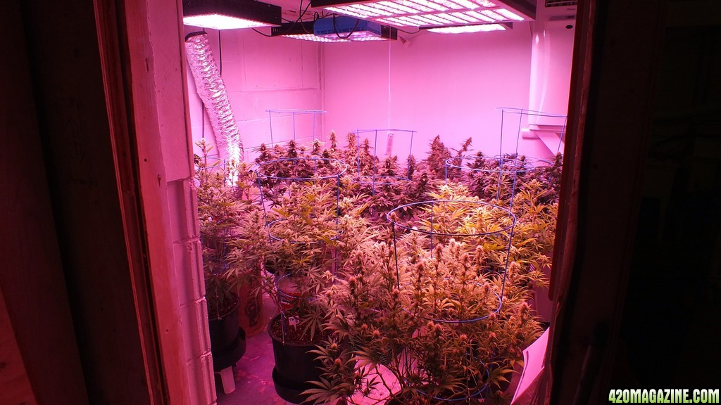 Mars Hydro Led Grow Light Discussion Page 134