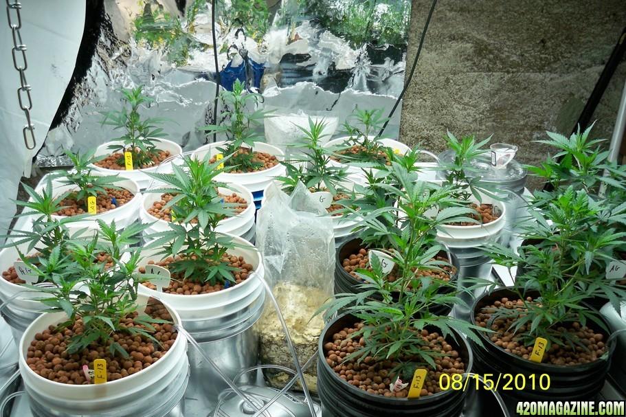 Drdan's GH Flora Nova (+) Vs  AN Grand Master Level Hydro Grow   420