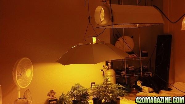 8-29-growroom3.jpg