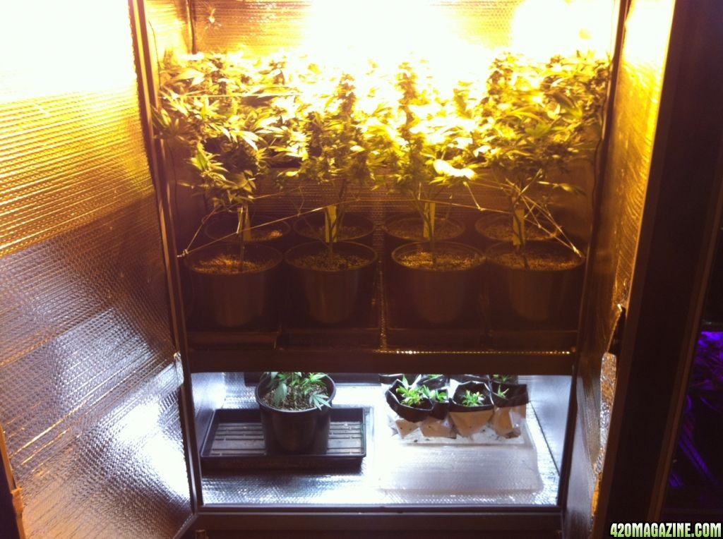 Super Stealth Dual 600w + LED + T5 Perpetual Cabinet Grow