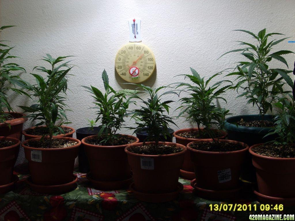 Blue_Planet_Sponsored_Grow_002.jpg