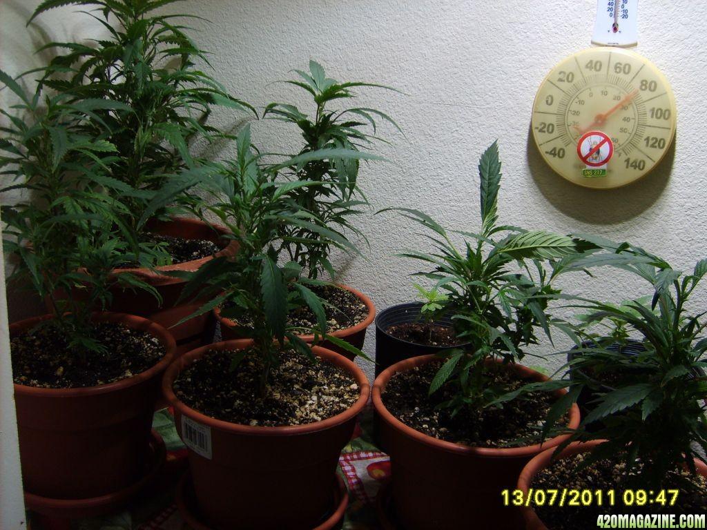 Blue_Planet_Sponsored_Grow_004.jpg