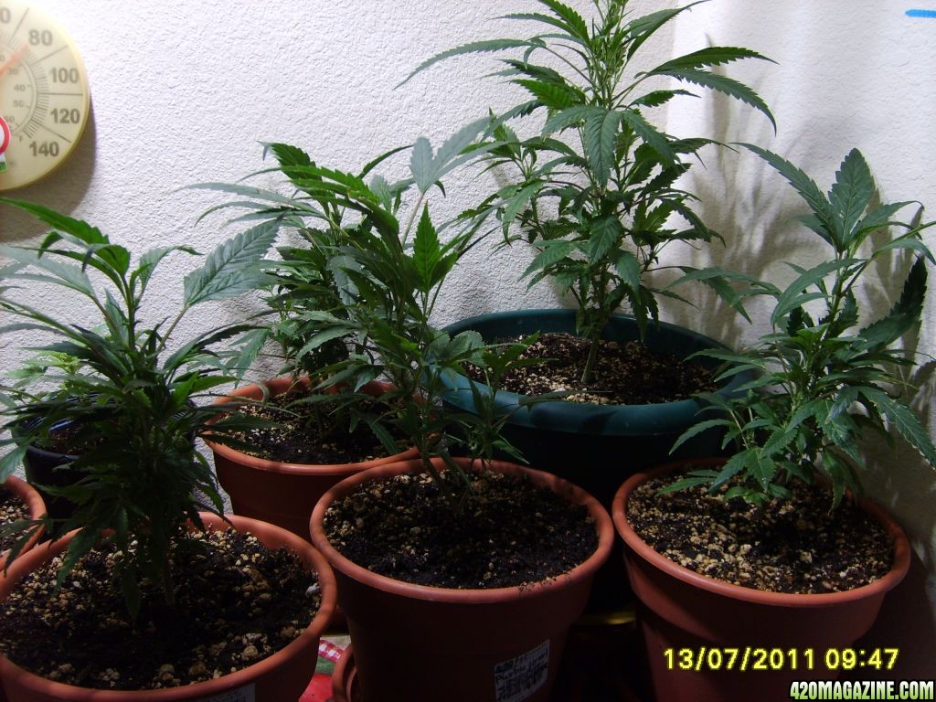 Blue_Planet_Sponsored_Grow_006.jpg