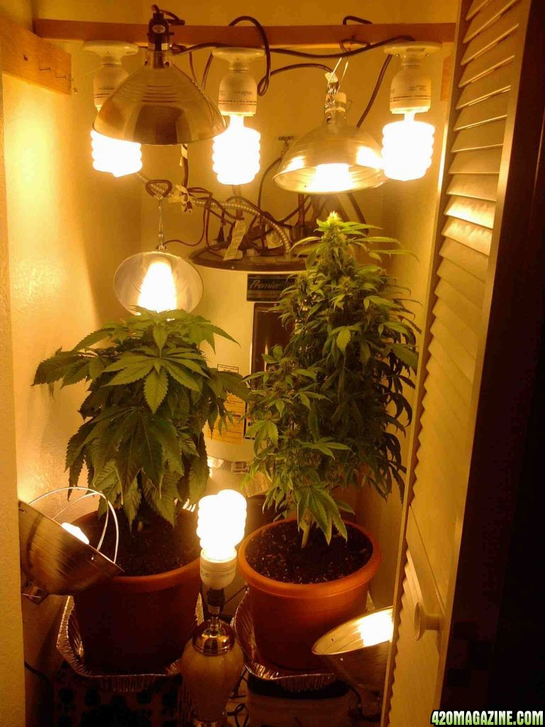 Closet+Grow+Setup Closet Grow Setup http://www.420magazine.com/forums