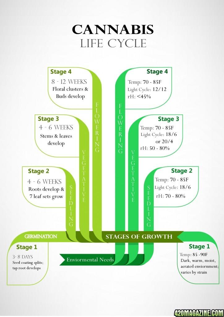 Cannabis-_Life_Cycle-page-0.jpg