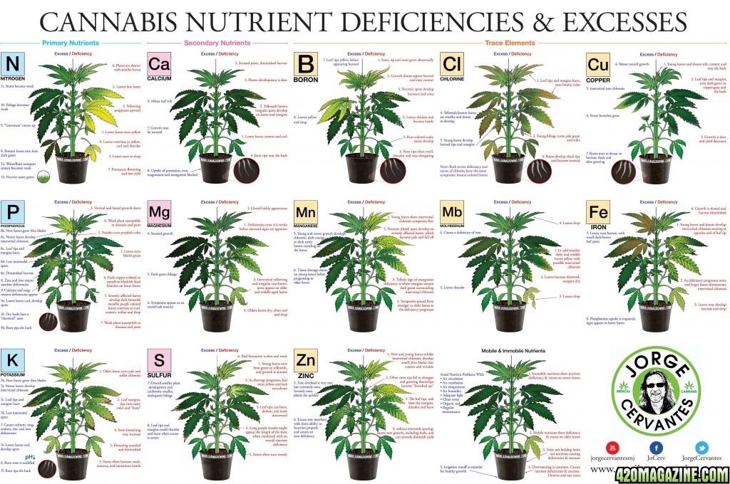 CannabisPoster40003.jpg