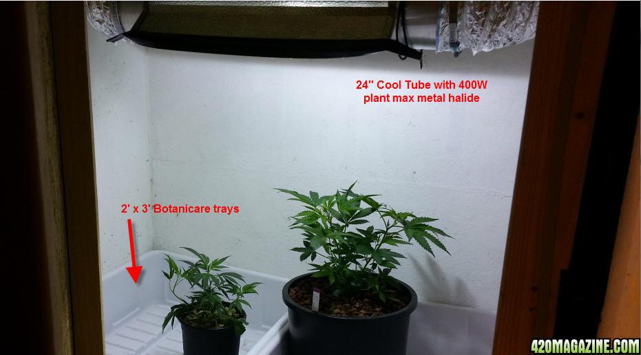 10oz per plant perpetual indoors
