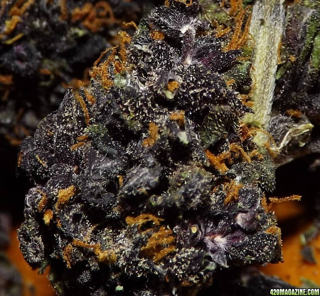 420 Magazine S Nug Of The Month January 2014 420