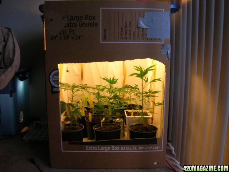 Uk Grow Room Design