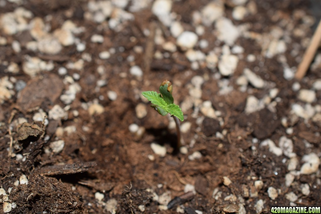 Some classic favorites other things in soil page 6 for Things in soil