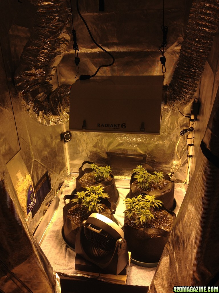 The 4x4 Grow Tent Club Page 4