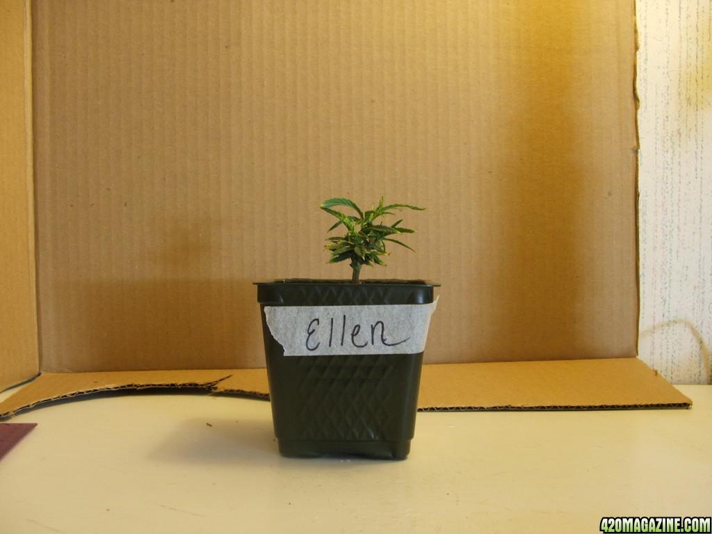 Ellen_2_7d.JPG