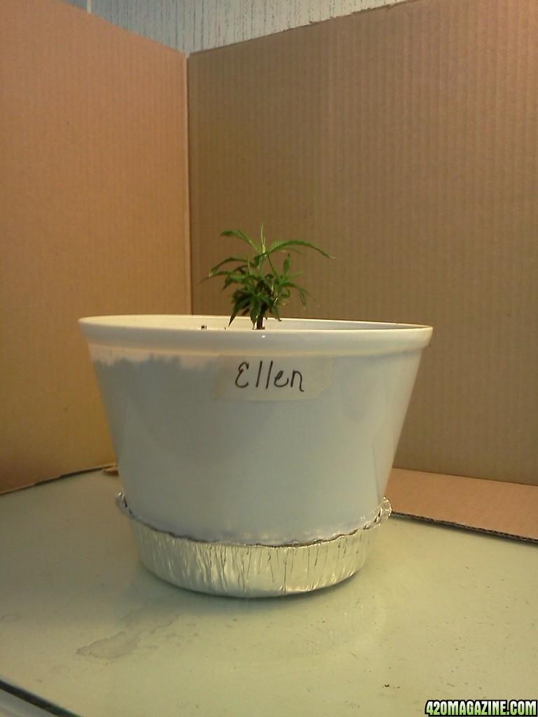Ellen_4_8d.jpg