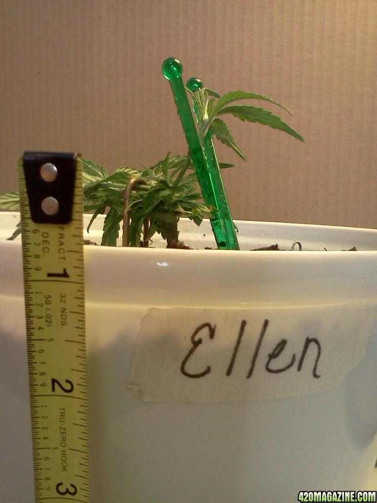 Ellen_6_11d.jpg