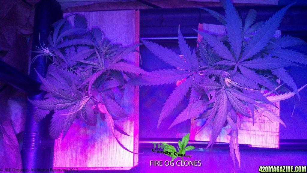 FireOGCLONES.jpg