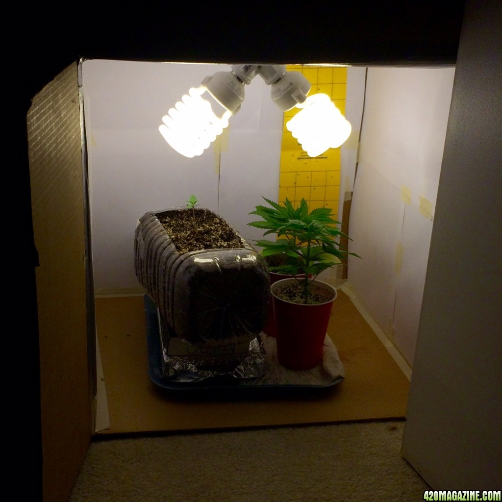 How To Inexpensively Cool A Small Grow Box 420 Magazine