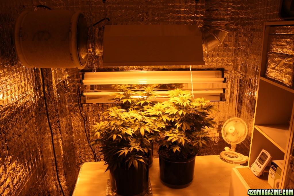 GrowRoom91911.jpg