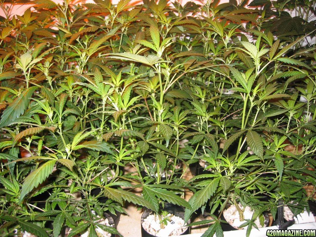 Grow_854.jpg