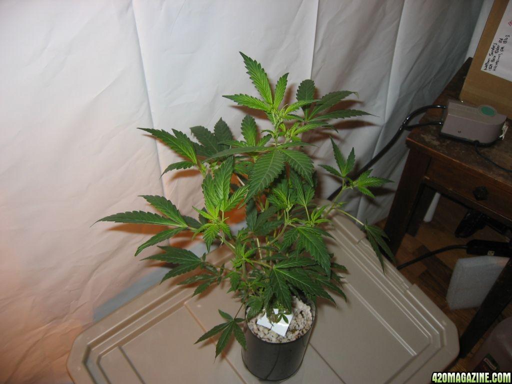 Grow_860.jpg