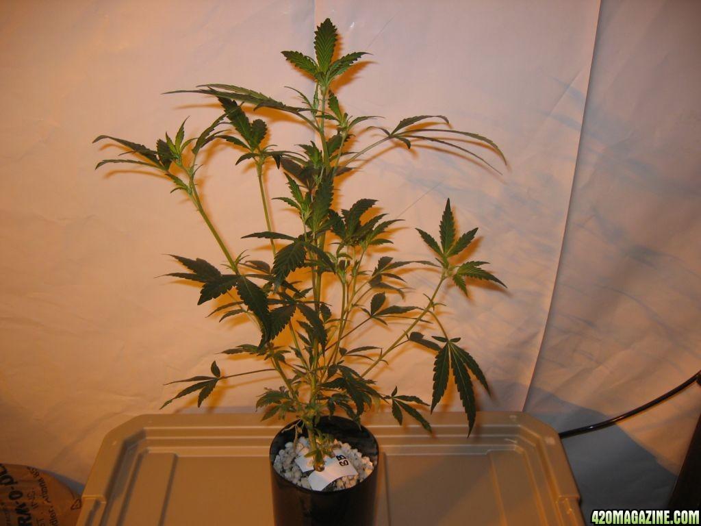 Grow_862.jpg