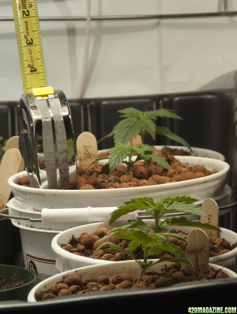 Grow_Table_Front_View.jpg