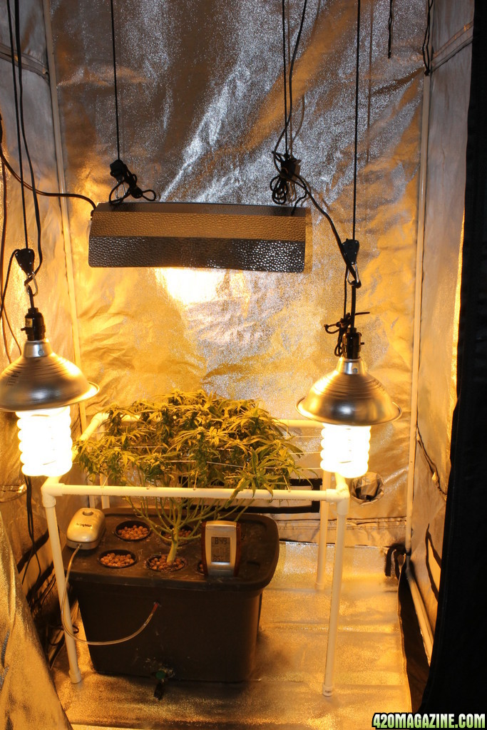 New Grow tent //.420magazine.com/gallery/...Grow_tent5.JPG & Boomer444u0027s New and Improved Indoor Grow