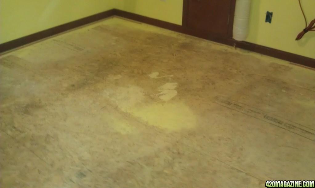 Paint That Kills Black Mold