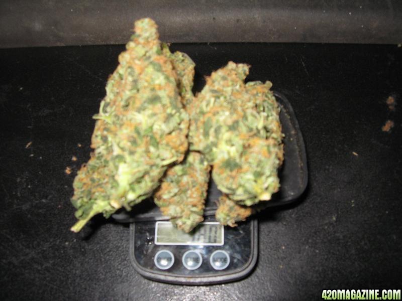 One gram of marijuana reanimators