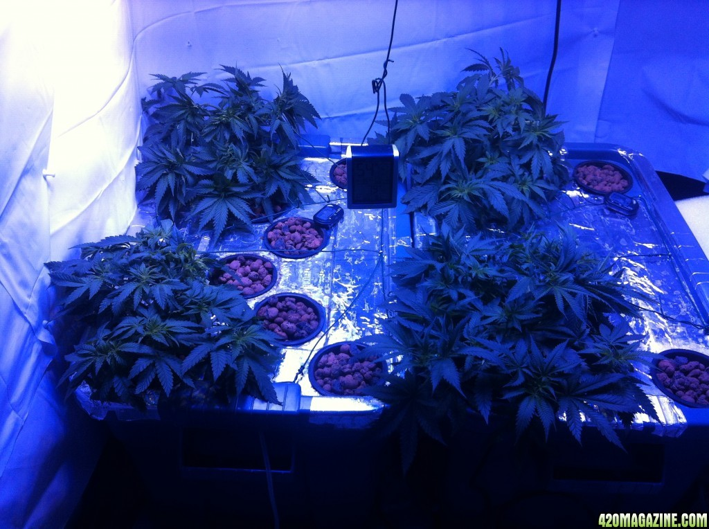 Properly use an LED with both veg & bloom switches   420