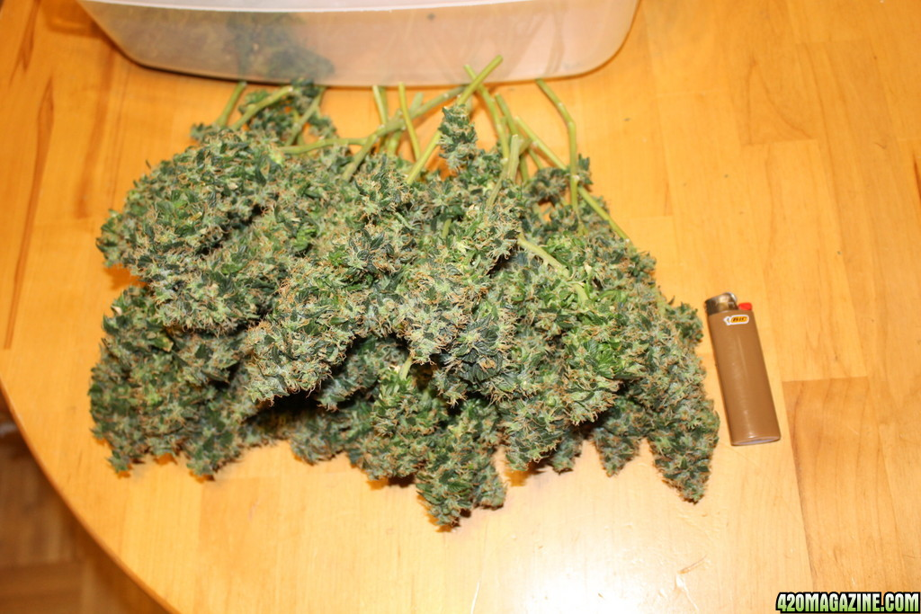 how to grow yams indoors