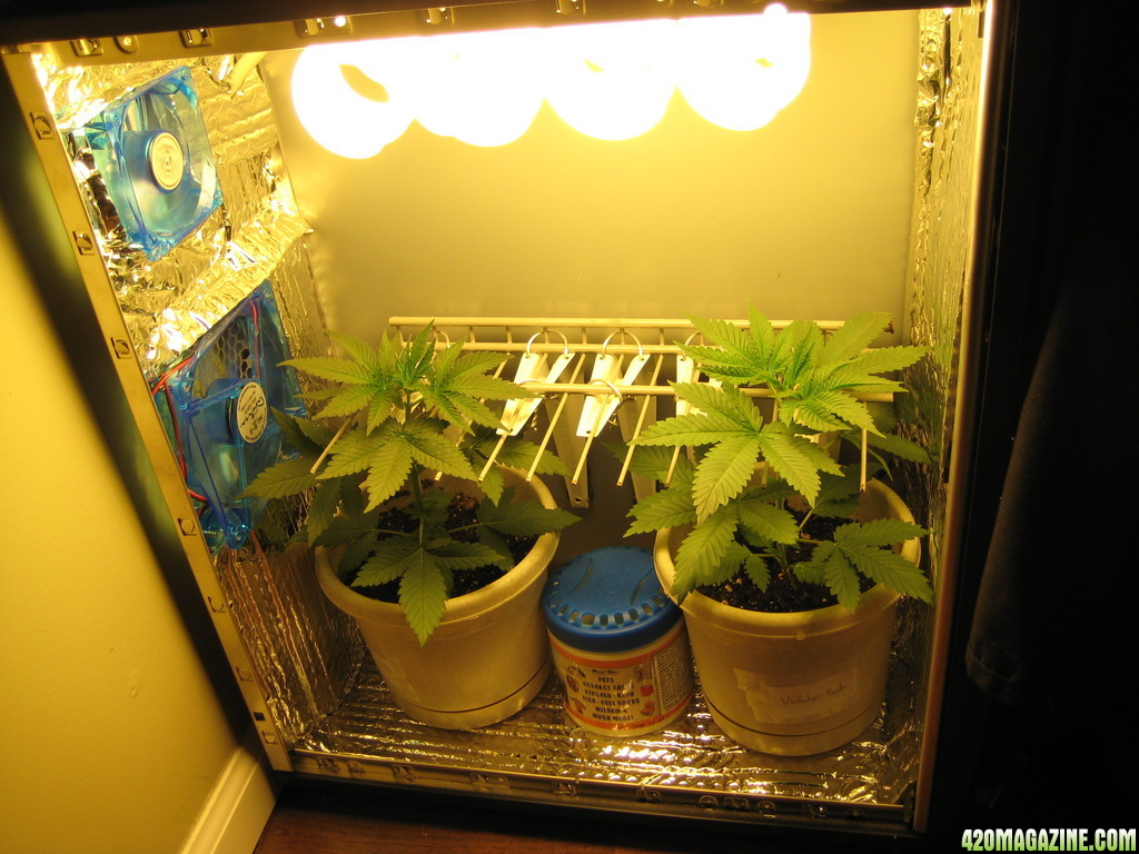 First Grow Box For White Widow 420 Magazine